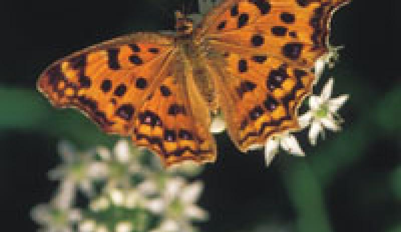 Meet McManus - Talk and Tour: Insects in Winter