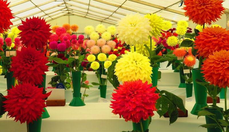 Dundee Flower and Food Festival 2019