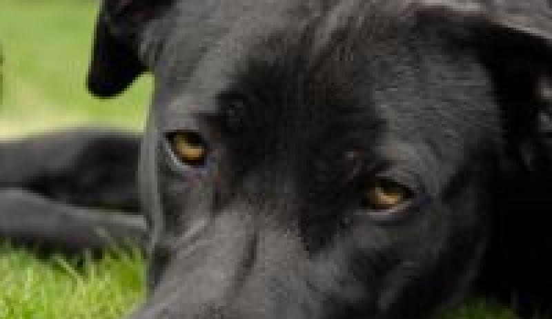 PDSA - Wellbeing Checks for Dogs
