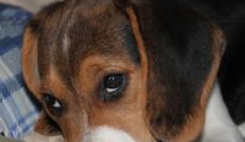 Maxwelltown Dog Training Club